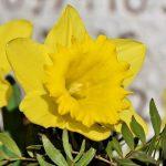 6 квітня – переддень Благовіщення: традиції, обряди та прикмети