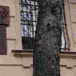 Чому зірка 1960 Світлана Коркошко залишилася без ролей, і що допомогло їй повернутися в професію через 20 років