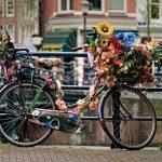 3 червня — Оленин день: історія, традиції та прикмети